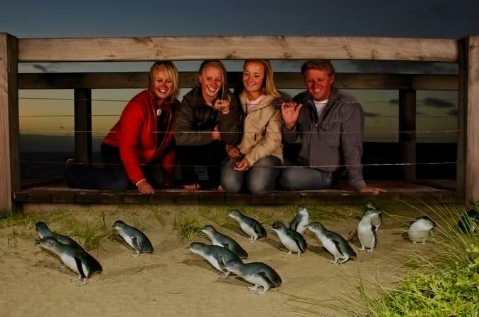 Парад пингвинов Австралии